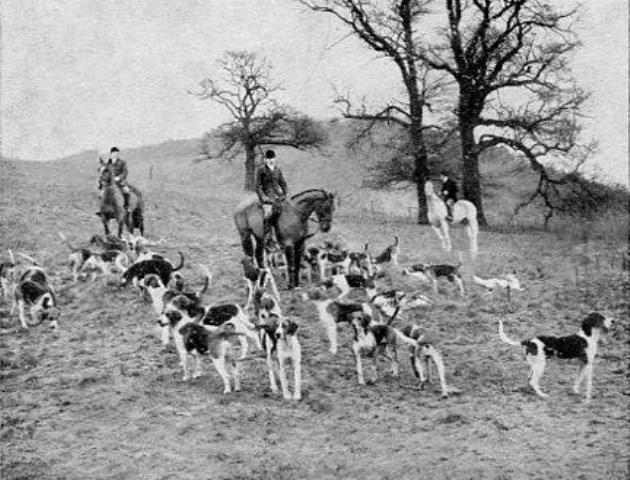 [Ledbury Hunt at Holly Bush]
